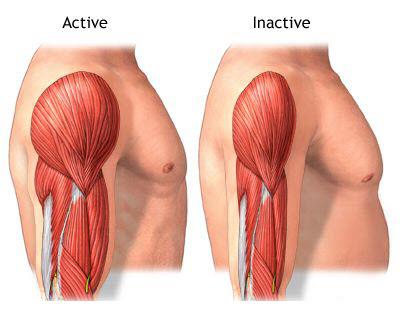 5bb4aab77 O indivíduo não treinado perde cerca de 10% de sua massa muscular até os 50  anos. A partir daí